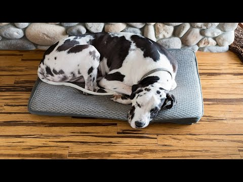 music for dogs with anxiety - anti anxiety music for dogs - cure separation anxiety with dog music!