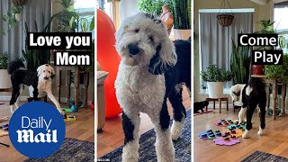 The genius dog who has learned how to talk using a sound board