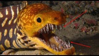 TOP 10 Most Dangerous Sea Creatures - Amazing Animal Documentary 2016