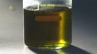 Общая биология. Наблюдение флуоресценции хлорофилла
