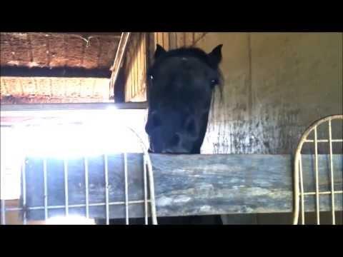 "Knight Shade ""THE TALKING HORSE"" - Warren Easton High Alma Mater"