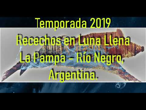 Cacería Jabalíes Antílopes La Pampa Río Negro Argentina