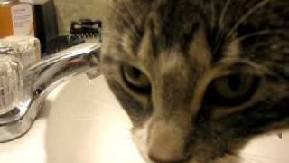 Cat Tries To Bite Water From Faucet