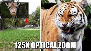 Nikon Coolpix P1000 125x optical zoom test world record - tigers, giraffe