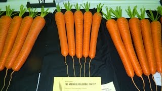 Allotment Diary : Preparing the Exhibition Show Carrot & Parsnip Compost
