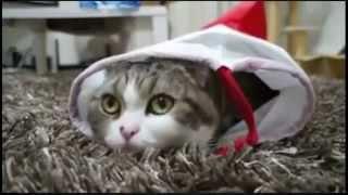 Котэ снова веселят))приколы коши приколы с кошками