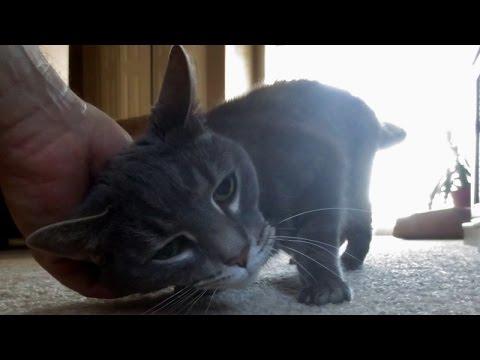 Understanding Your Cat - Rubbing/Scent Marking