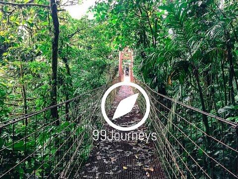 Monteverde Und Santa Elena Costa Rica Reisebericht – Nebelwald In Monteverde Costa Rica