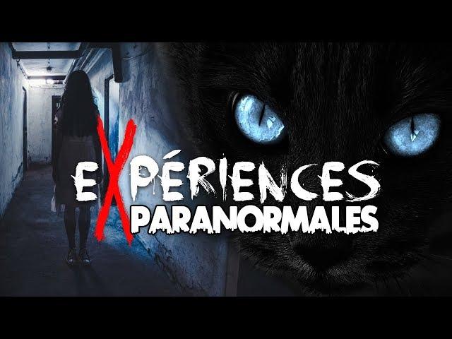 Expériences Paranormales - Les mystérieuses histoires de chats !