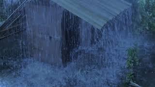Sleep Hypnosis With Heavy Rain On Bamboo Roof & Far Thunder In Foggy Forest - Rain On Roof For Sleep