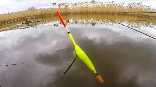 ОНО ПОЛОЖИЛО ПОПЛАВОК СЛАМАЛО УДОЧКУ ДУМАЛ КАРП Рыбалка на поплавок весной 2021