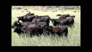 Sinclair cattle Company