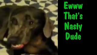 Dog Farts And Smells It Then Makes The Funniest Face-dog Farts And Makes A Funny Face