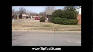Mack - Dog Training Tulsa