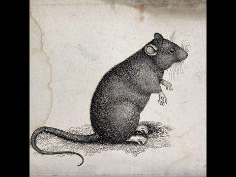 Los Invasores - El Raton (Peter Edit)