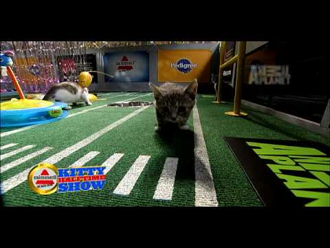 Thumbnail for Cat Video Puppy Bowl VI- Kitty Halftime Show