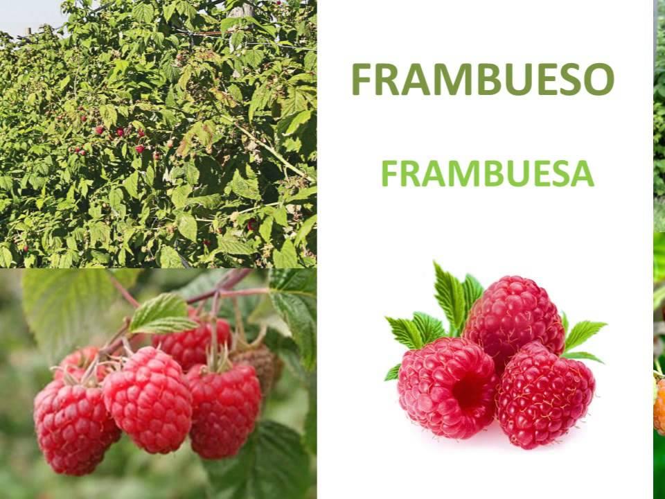 El origen de las frutas rboles frutales fruit trees for Arboles frutales para el jardin