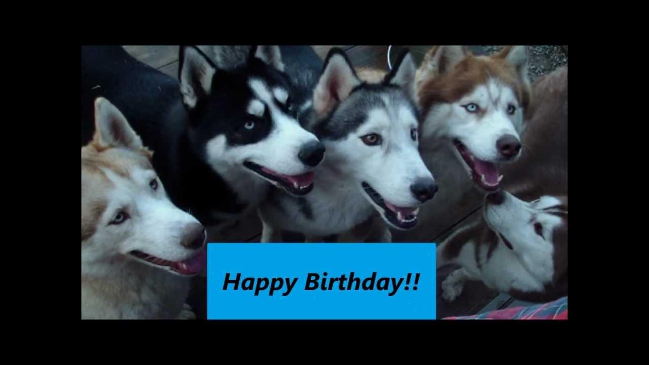 Happy Birthday Song Husky Style Youtube
