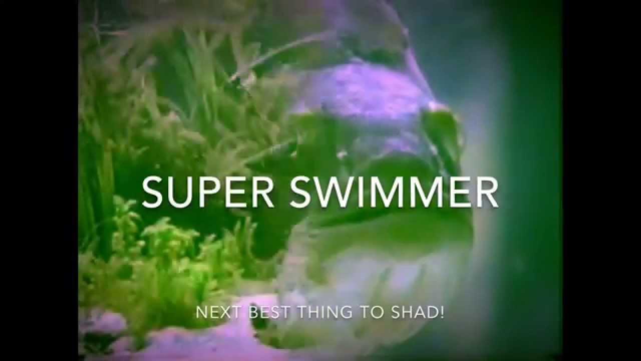 want a swimbait mold