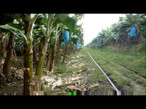 Viaje en tren al ramal de Monteverde - Siquirres -