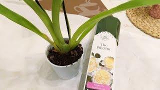 Орхидеи по уценке/ Купила мильтонию и розу/Измельчитель-  дачные работы.