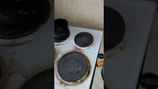 Как выявить тараканов в квартире