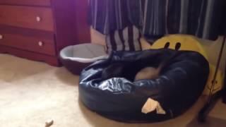 видео Где кремировать собаку в Москве