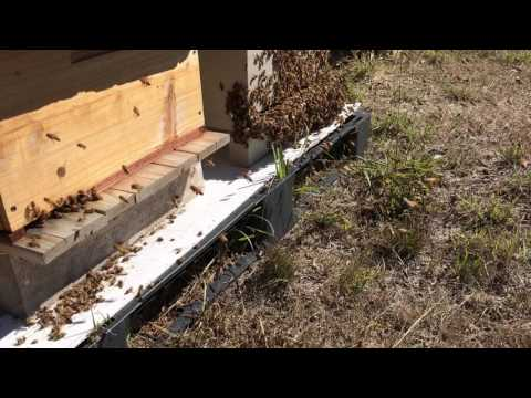 Pesticide poisoning of my bees?