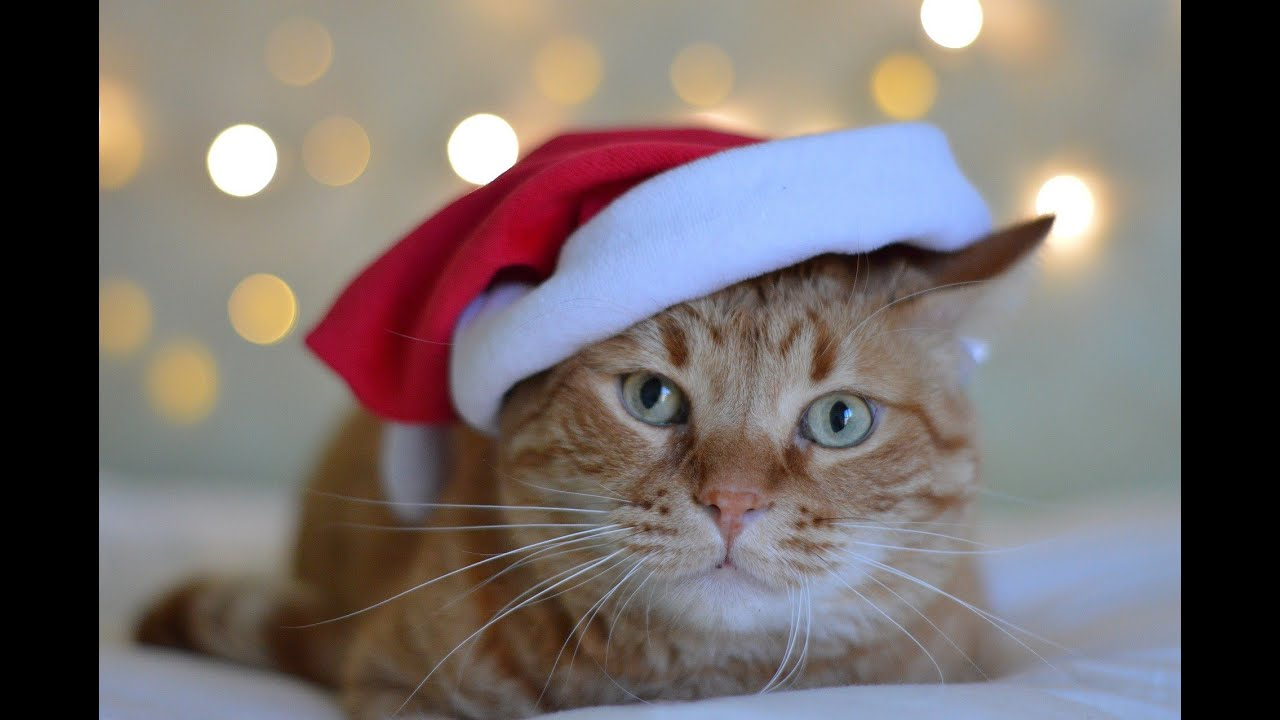 No Kill in Motion: Holiday Pet Adoptions
