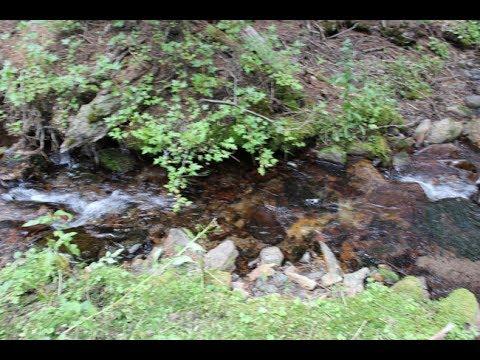 BrisBois Gold Mine French Creek 20 acre Mining claim