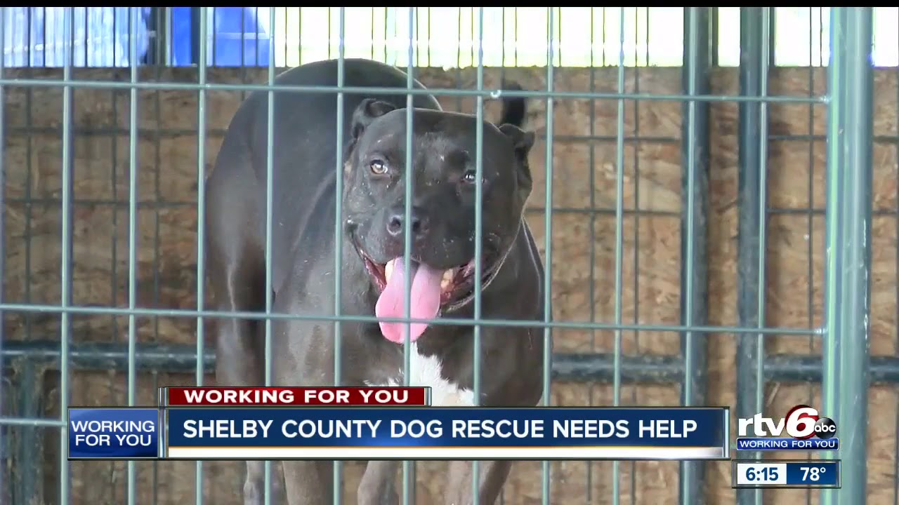 Shelby County animal shelter needs help