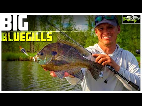 Bluegill Fishing Tips With Bobbers And Plastic Lures