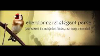 Repeat youtube video Chant Chardonneret d'Algerie Parva Rec en France 2006 Top
