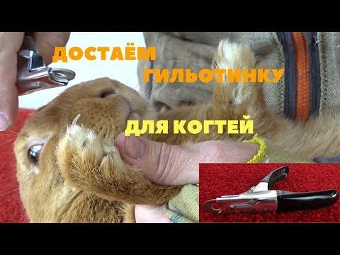 Как безболезненно подстричь когти кролику при помощи гильотины