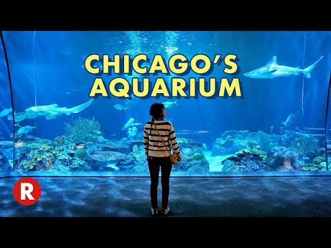 Diving Into Chicago's Shedd Aquarium // One Of The World's Largest Aquariums!