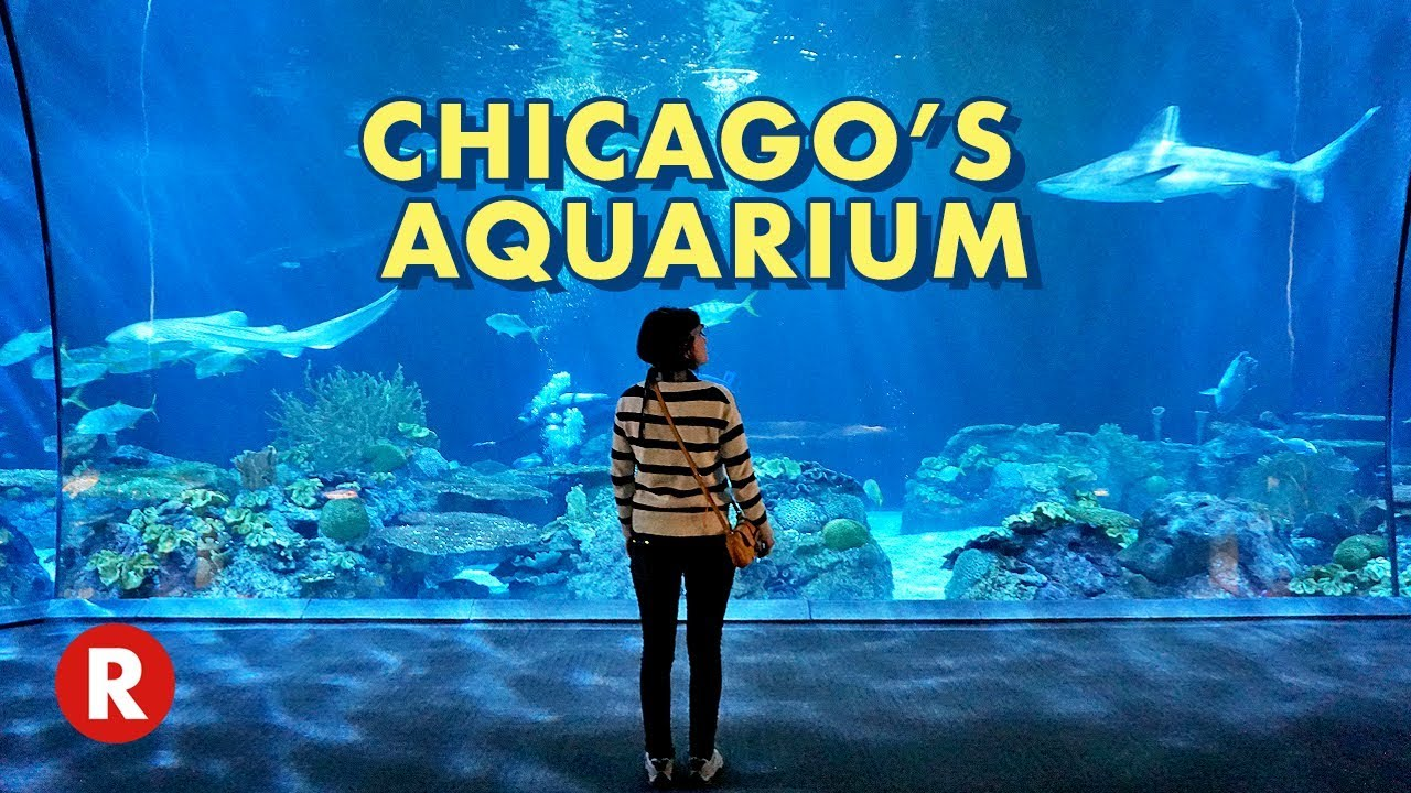 diving into chicago s shedd aquarium one of the world s largest