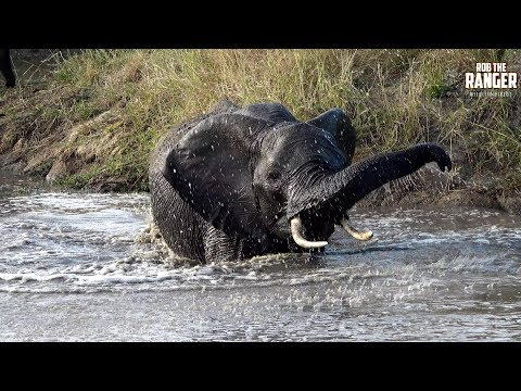 Watch These Elephants Having Fun At A Waterhole! (Introduced By Nicky's Toy Box)