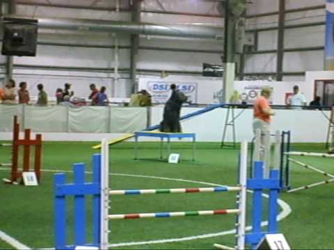 Hilo - Briard in excellent standard agility - 7/31/10