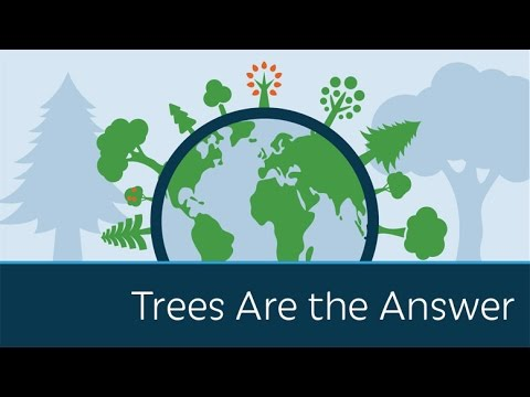 Trees Are the Answer