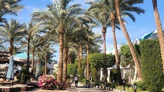 Sultan Gardens 5 Египет Шарм Эль Шейх Обзор отеля Наш отдых