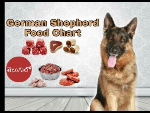 10 Essential German Shepherd Diet Tips