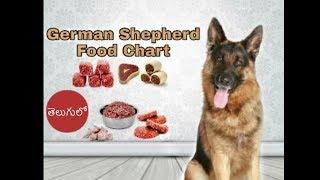 German shepherd Diet and Food Chart in Telugu | Taju logics