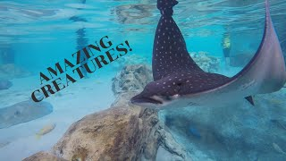 Stingrays ATE MY CAMERA at Discovery Cove !