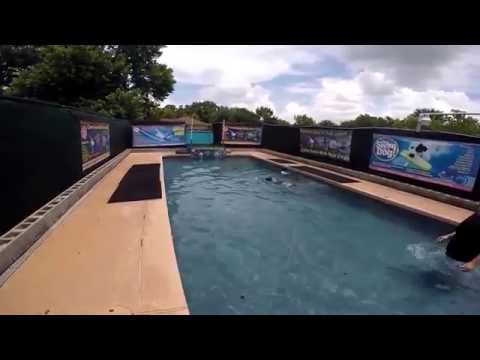 Australian Cattle Dog Conroe jumps in swimming pool