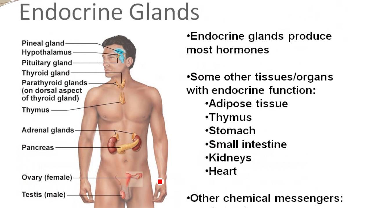 Chapter 16 Introduction To The Endocrine System Youtube