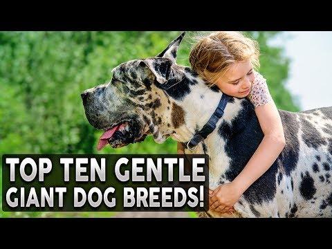 dog breeds   PuppiDogs