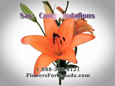 Flowers For Canada - Canadian FTD Florist- Flower Delivery
