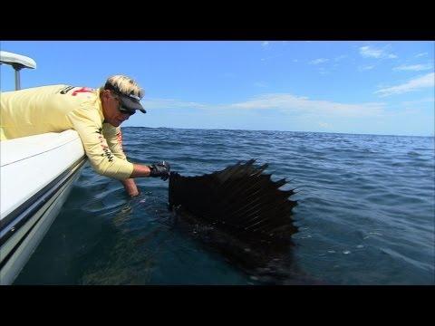 Catching Sailfish Using Humminbird 360 Stuart Florida
