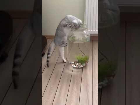 Stupid Cat Falls Into Narrow Fish Tank And Gets Stuck