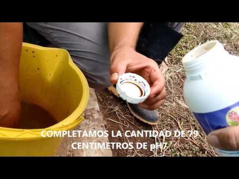 Aplicacion Lombricol fo-e01 pH7 y Bacteriano Piscicola Villa Mariana pereira 1ra parte